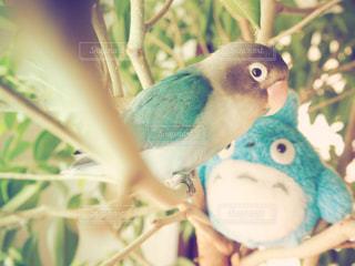 青い小鳥が木の枝に腰掛け - No.716454