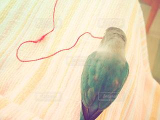 近くに鳥のアップ - No.716456