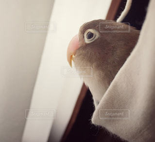 小鳥のアップ🤗いい表情💕 - No.716458