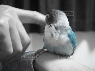 幸せの青い鳥❤️の写真・画像素材[782954]