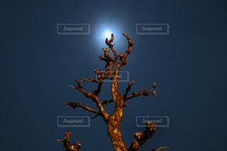 自然の写真・画像素材[446751]