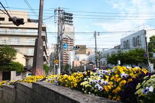 No.462151 花