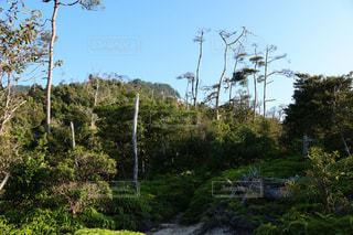 風景 - No.540355