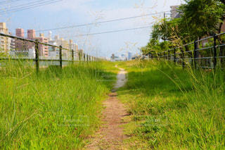 緑豊かな道 - No.736230