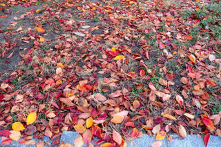 秋の終わりの写真・画像素材[913202]