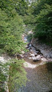 自然の写真・画像素材[446631]