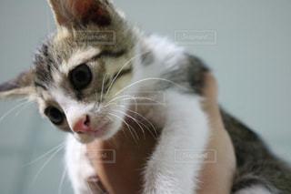 猫の写真・画像素材[446786]