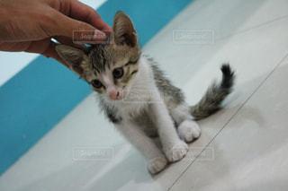 猫 - No.446787