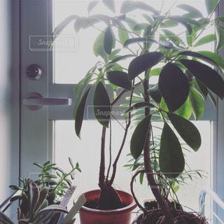 植物の写真・画像素材[454562]