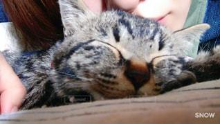 #猫 #一緒に #日向ぼっこの写真・画像素材[447208]