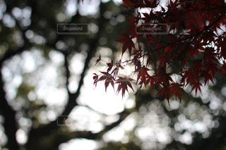 秋の写真・画像素材[448670]