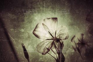 花の写真・画像素材[448778]