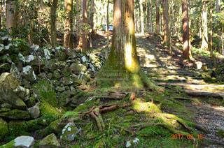 森林の写真・画像素材[470624]