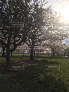 公園 - No.448412