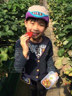 イチゴの写真・画像素材[448476]