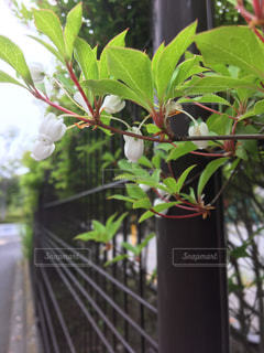 花の写真・画像素材[449736]