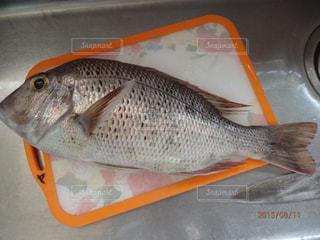 No.450037 魚