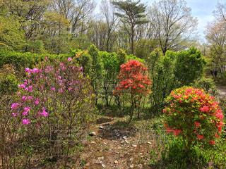 春の写真・画像素材[461330]
