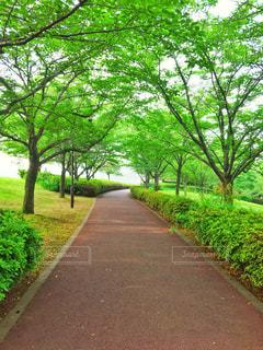 公園 - No.514635