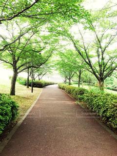 公園 - No.514636