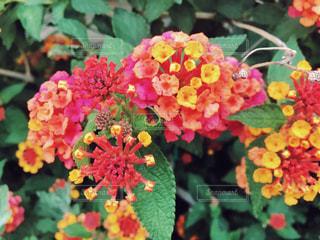 花の写真・画像素材[518408]