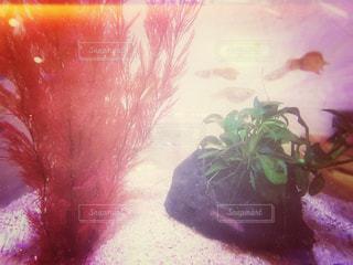 魚の写真・画像素材[559973]