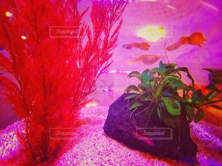 魚の写真・画像素材[559974]