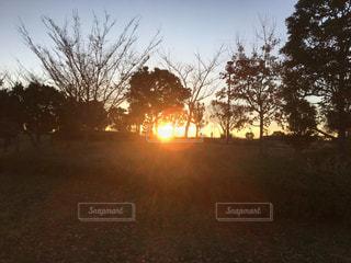 朝焼けの中のシルエットの写真・画像素材[924169]