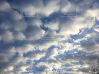 羊雲の群れの写真・画像素材[1013549]