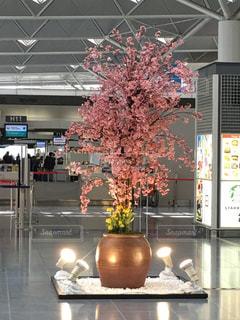 桜 - No.448941