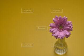 花の写真・画像素材[533076]