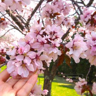 春の写真・画像素材[448918]