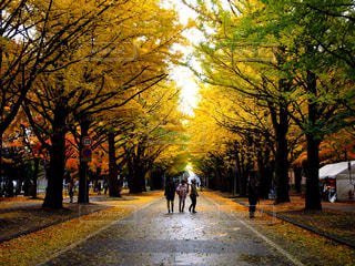 秋の写真・画像素材[481160]