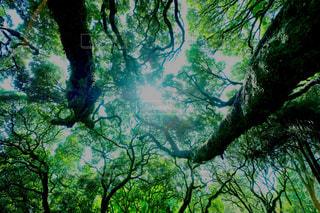 森林 - No.449308