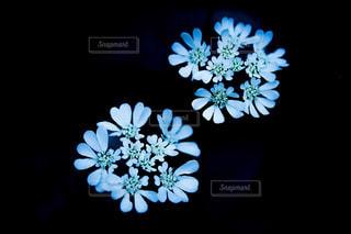 花の写真・画像素材[536865]