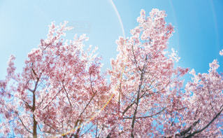 近づく春の写真・画像素材[1848537]