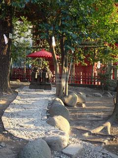 赤い傘と狛犬の写真・画像素材[1020196]