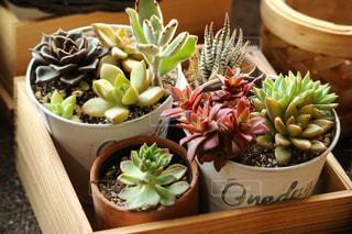 植物の写真・画像素材[449597]