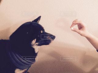 No.452254 犬