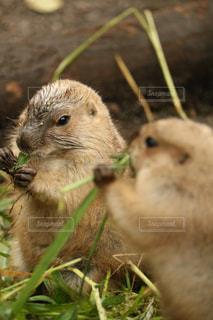 動物の写真・画像素材[452509]