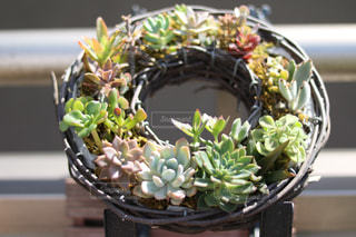 植物 - No.458738