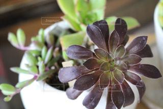 植物 - No.464228