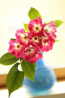 花の写真・画像素材[487450]