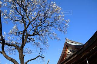 湯島天神の写真・画像素材[1058397]