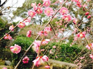 花の写真・画像素材[450462]