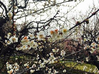 花の写真・画像素材[450464]