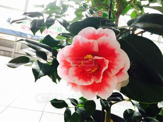花の写真・画像素材[450467]
