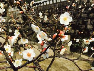 花の写真・画像素材[450584]