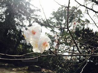 花の写真・画像素材[450587]
