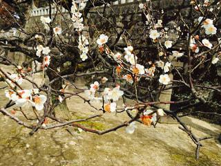 花の写真・画像素材[450597]